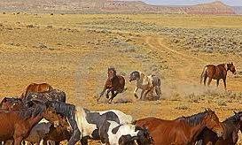 herd dynamics chase