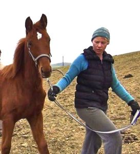 how to bridle a horse: building trust from the start