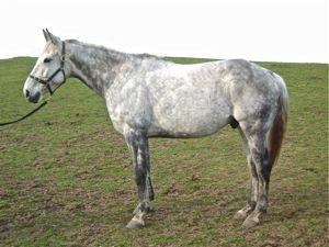 Tali stiff horse