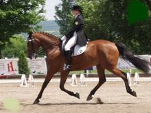 disrecpectful dressage riding