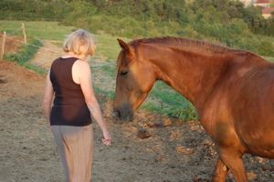 developing a personal relationship with horses