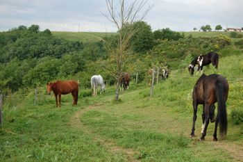 horses in their paddock paradise