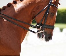 bridle problems from tight nosebands