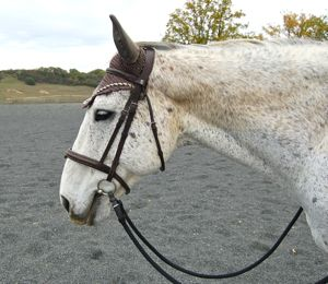 A happy horse in a comfortable bridle