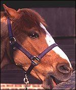 horse crib-biting