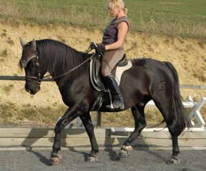 dressage saddles: transmission of aiding