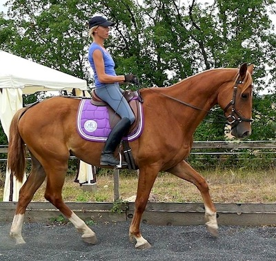 dressage training tips for engagement