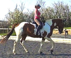 dressage training tips: leg position