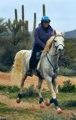 endurance horse in Renegade hoof boots