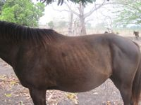 equine back problems: unhealthy spine