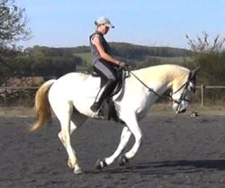 equine back problems: correct work
