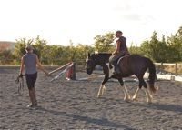 equine back problems: correct lunging