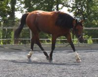 equine back problems: correct preparation