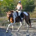 suppleness in different horses