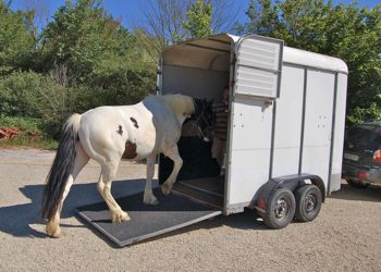 loading a horse