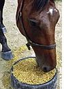 unhealthy grain diet for horses