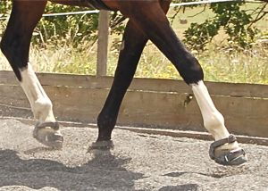 riding with hoof boots for barefoot protection