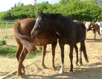 happy horses previous horse behavioural problems