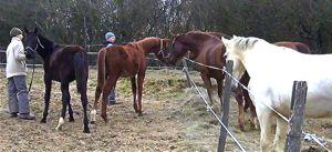 herd behavior: integrating new members