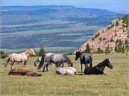 herd dynamics resting