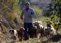 Cesar Millan's innate understanding of dog behavior