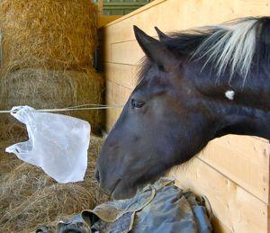 horse behavior: threat assimilation