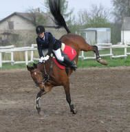 equine back problems: bucking