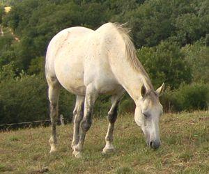 horse conformation: leg deformity