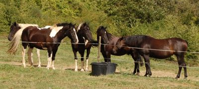 horse personality in the herd: dominance
