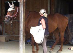 Healing horse trauma step 2