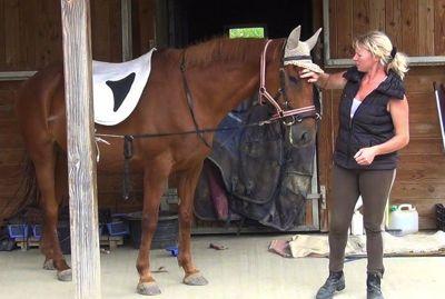 Healing horse trauma step 5