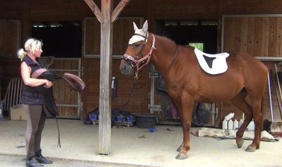 Healing horse trauma step 6