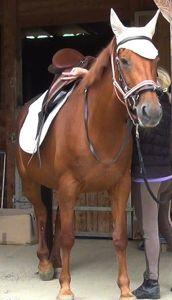 Healing horse trauma step 7