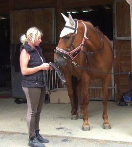 Healing horse trauma step 8