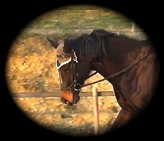 how to bridle a horse: a horse happy in her bridle