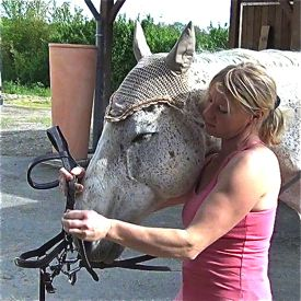 how to bridle a horse: step 3