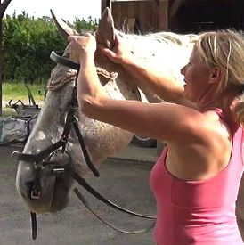 how to bridle a horse: step 6