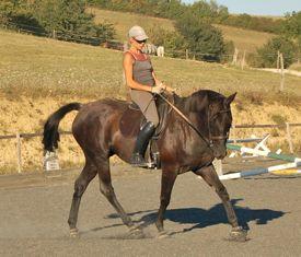 horse stories kafa