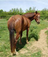 horse in good health