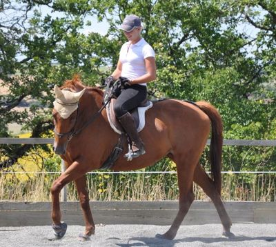 natural horse training true dressage