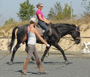 lunge lessons for rider fitness