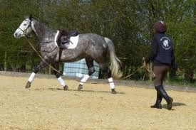 lunging a horse with no contact in the lunge line