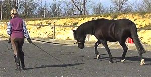 lunging a horse well