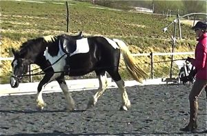 correct use of loose sidereins when lunging a young horse