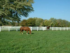 lush grazing