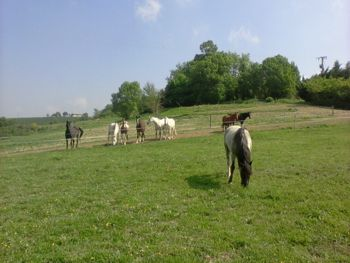 herd looking at new horse