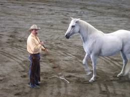 natural horse training tension