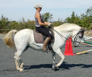 re-training an aggressive horse