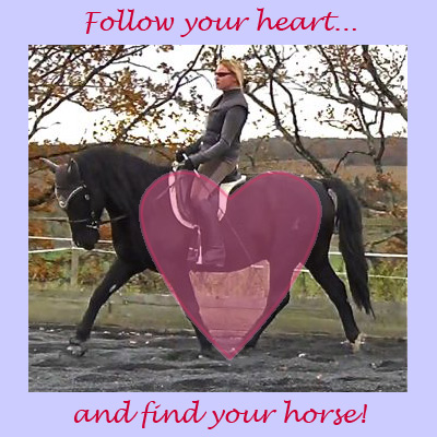 HHT e-Book How To Train A Horse Without Force Pt. 1