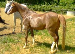 old horse good condition